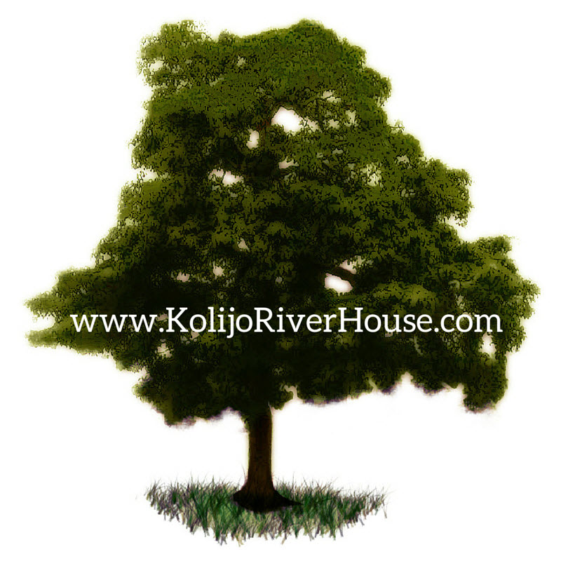 KolijoRiverHouse.com tree