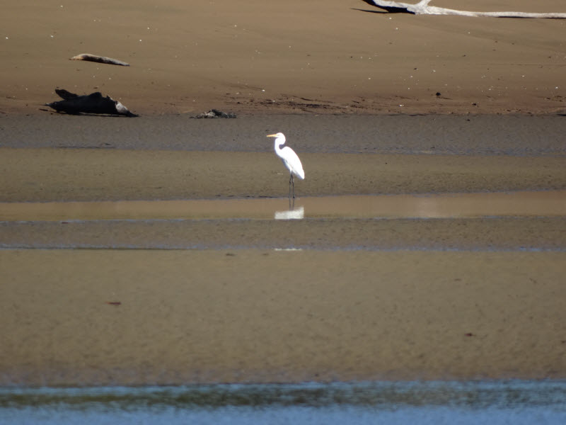 St Helens Beach-bird