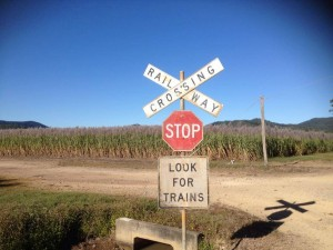 Watch out for Cane Train in kolijo