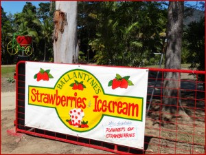 Strawberry Farm Gate